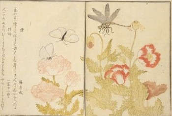 歌麿・蜻蛉・蝶.jpg