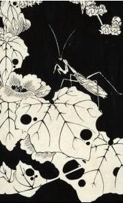 水葵.jpg