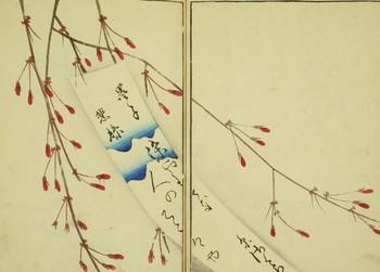 糸桜.jpg