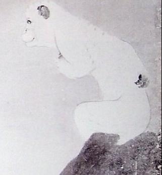 芦雪白猿.jpg